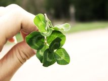 Clover and Hand Stock Photos