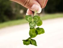 Clover and Hand. Image of a hand holding bright green clover, with line of green grass visible in background.  Soft focus and horizontal orientation Royalty Free Stock Image