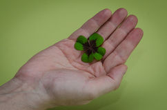 Clover in hand Royalty Free Stock Photography