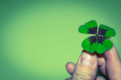 Clover in hand Royalty Free Stock Photos