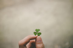 Clover Royalty Free Stock Photography