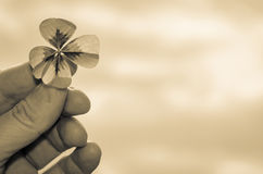 Clover in hand sepia Stock Photography