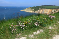 Clover and Horseshow vetch overlooking Alum Bay. A view of the countryside overlooking Alum Bay on the Isle of Wight Royalty Free Stock Photos
