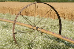 Clover irrigation Stock Photo