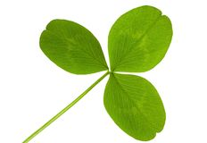 Clover isolated Stock Photography