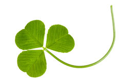 Clover isolated Stock Photos