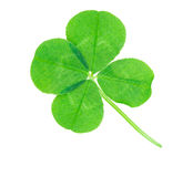 Clover. Isolated on white background Royalty Free Stock Photo