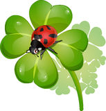 Clover and ladybug. Ladybug on a leaf of a chetyrekhlistny clover royalty free illustration