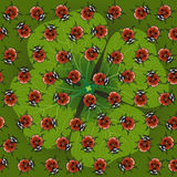 Clover with ladybug Stock Images