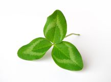 Clover leaf. Isolated on white background Stock Images