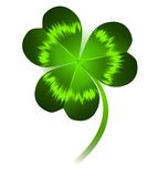 Clover leaf Royalty Free Stock Image
