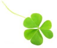 Clover leaf Royalty Free Stock Image