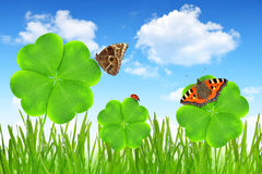 Clover leaf and butterflies Royalty Free Stock Photo