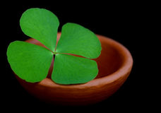 Clover leaf in a clay pottery Stock Images