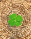 Clover leaf on cracked wood Stock Image
