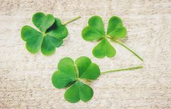 Clover leaf. Happy St. Patrick`s Day. royalty free stock photography