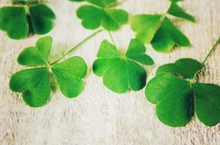 Clover leaf. Happy St. Patrick`s Day. royalty free stock photos