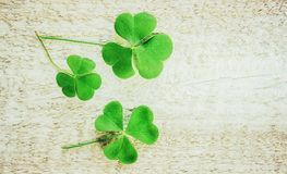 Clover leaf. Happy St. Patrick`s Day. stock photography