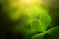 Free Clover Leaf In Lens Flare Stock Images - 83588524