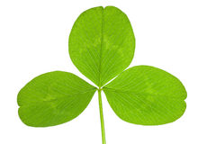 Clover leaf isolated Royalty Free Stock Photos