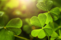 Clover leaf in lens flare royalty free stock photography