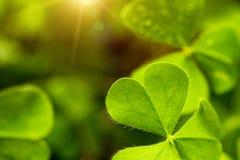 Clover leaf in lens flare stock images
