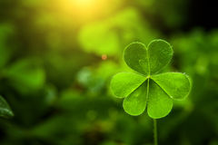 Clover leaf in lens flare royalty free stock images