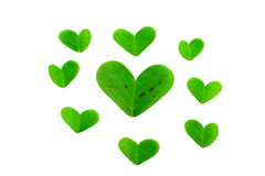 Clover leaf parts Royalty Free Stock Photos