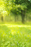 Clover leaf on right green blurred background Stock Photography