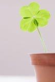 Clover leaf Stock Photos