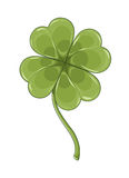 Clover leaf on white Royalty Free Stock Photo