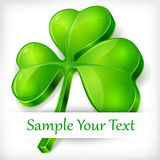 Clover leaf on white & text Royalty Free Stock Image