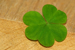 Clover leaf Stock Photography