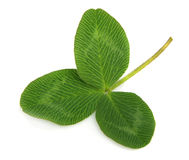 Clover leafs Royalty Free Stock Photos