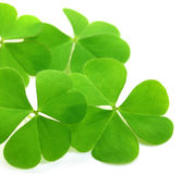 Clover leaves. Over white background royalty free stock photo