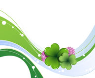 Clover leaves and flowers Stock Photos