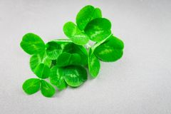 Clover leaves on a gray background with droplets of water. St.Patrick 's Day. Clover leaves on a gray background with droplets of water. St.Patrick 's Day Stock Image