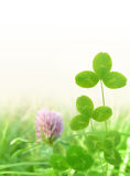 Clover leaves on meadow Stock Photo