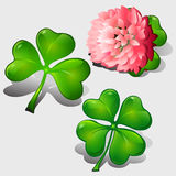 Clover leaves and pink flower Royalty Free Stock Images