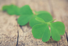 Clover leaves. On timber surface royalty free stock photos