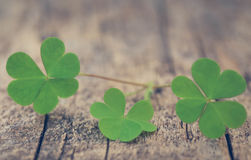 Clover leaves. On timber surface royalty free stock photo