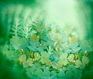 Clover and little yellow flowers Royalty Free Stock Photos