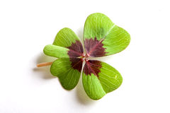 Clover macro Royalty Free Stock Images