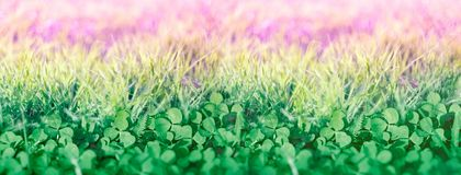 Clover in meadow, beautiful nature in spring. Clover in meadow clover leaf, beautiful nature in spring royalty free stock photos