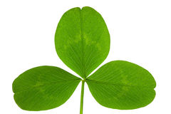 Free Clover On Isolated Stock Images - 7741394