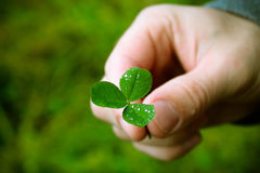 clover in the person`s hand, a symbol of luck Royalty Free Stock Images