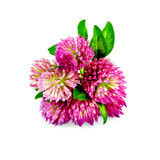 Clover pink bouquet Royalty Free Stock Photography