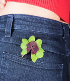 Clover in pocket Royalty Free Stock Photo