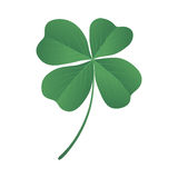 Clover quatrefoil Royalty Free Stock Image