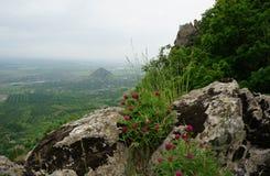 Clover on the rock. Mountain landscape Stock Photos